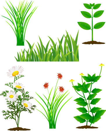 Flower and grass Stock Vector - 9145754