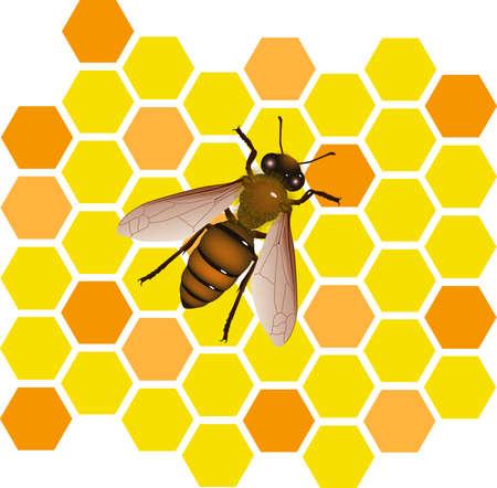 bee vector Vector