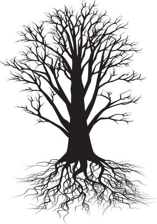 trees with roots: tree silhouette