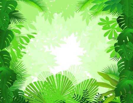 rainforest tree: forest background