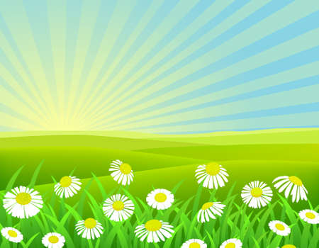 summer meadow: landscape background
