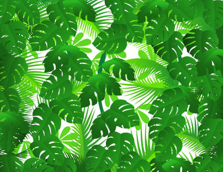 rainforest tree: Green forest background