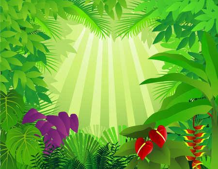 mystical forest: Forest background Illustration