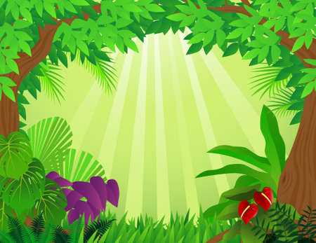 rainforest tree: Forest background Illustration