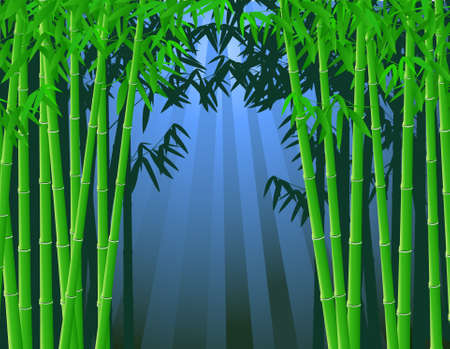 Bamboo forest Stock Vector - 9698970