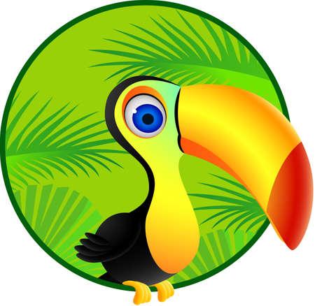 rainforest: Toucan bird Illustration