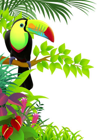 rainforest tree: Toucan bird in the jungle