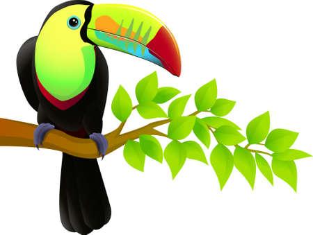 ¡rboles con pajaros: Aves de tucán Vectores