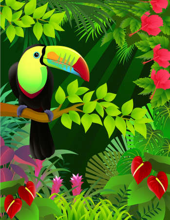 mystical forest: Toucan bird in the jungle