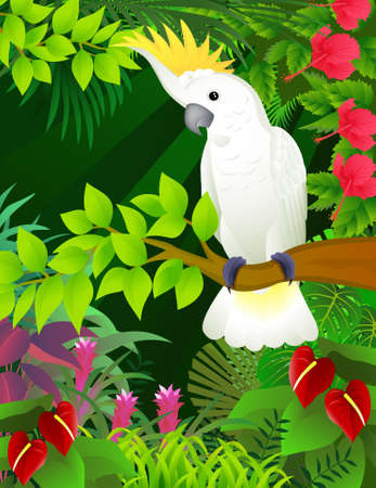 ferns: Cockatoo in the tropical forest Illustration