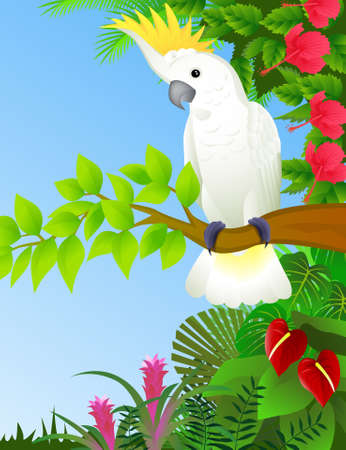 tropical bird: Cockatoo in the tropical forest Illustration