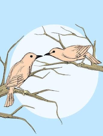 insectivorous: Couple bird Illustration