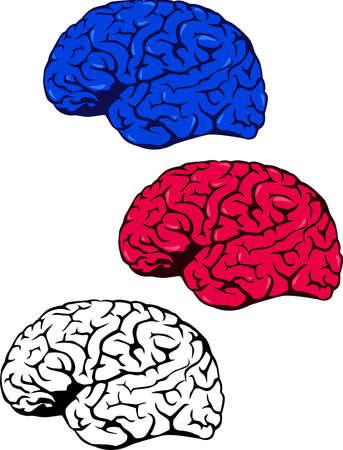 Human brain Stock Vector - 10178773