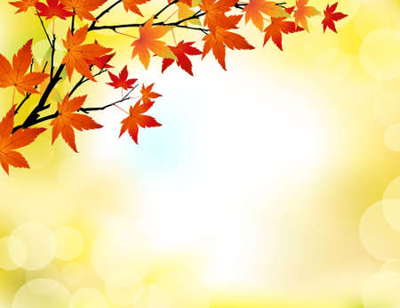 maple leaf: Autumn background