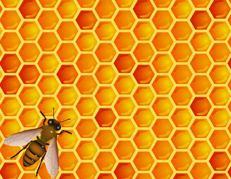 honey comb: Bee and honey comb Illustration