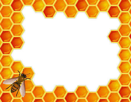 combs: Bee with honey comb
