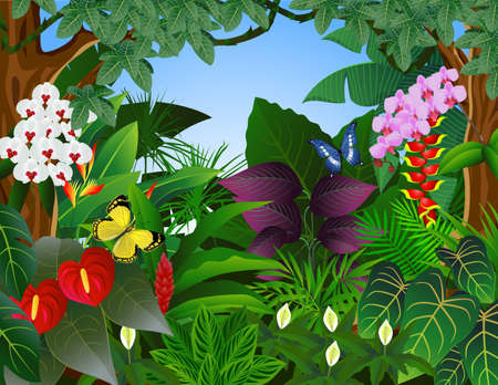 ferns and orchids: Nature background Illustration