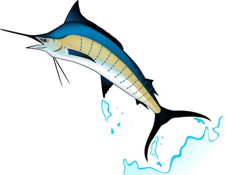 sailfish: Marlin рыбы Иллюстрация