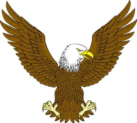 halcón: Águila