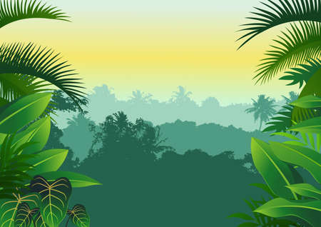 tropical rainforest: jungle