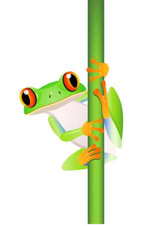 лягушка: Лягушка мультфильм
