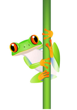 frog illustration: Frog Cartoon