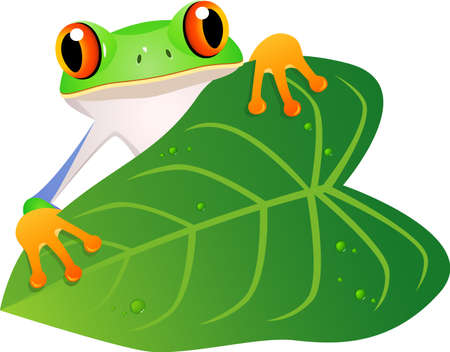 eyeing: Frog cartoon Illustration