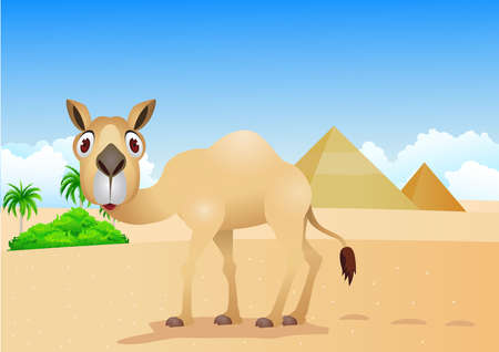 cartoon illustration of camel on Ilustracja
