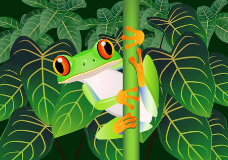 tropical frog: Frog cartoon Illustration