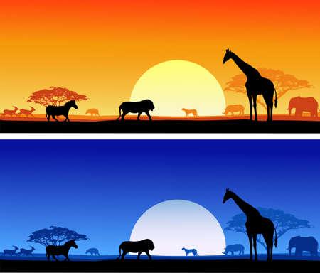 safari background photo