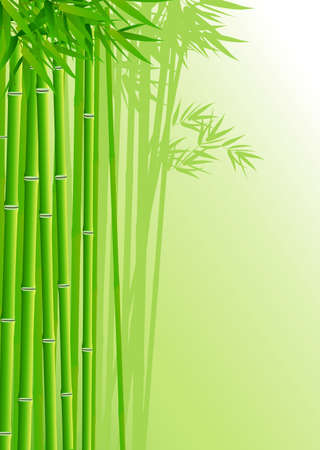 traditionally chinese: Bamboo forest background