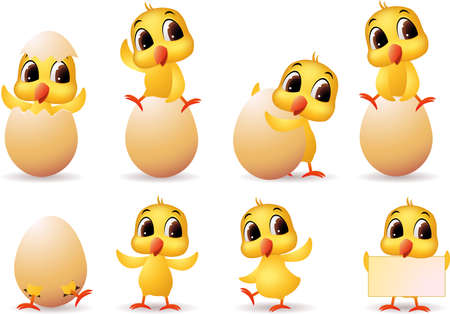 Cute litle chicks photo