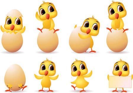 affable: Cute litle chicks