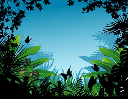 Tropical forest background  photo