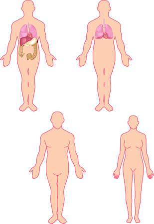 full figure: Human anatomy Stock Photo
