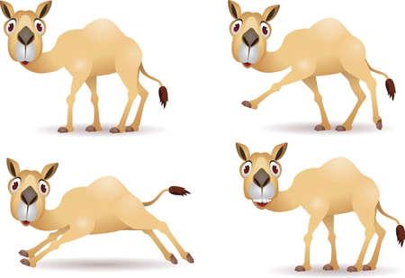 one humped: Funny camel cartoon