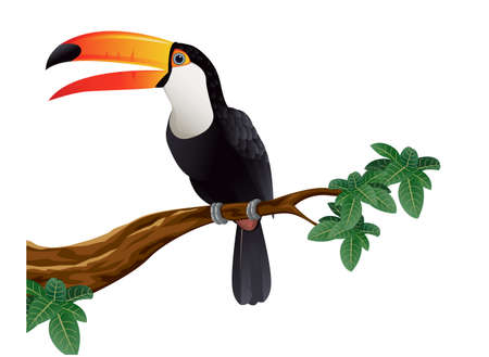 Toucan bird Illustration