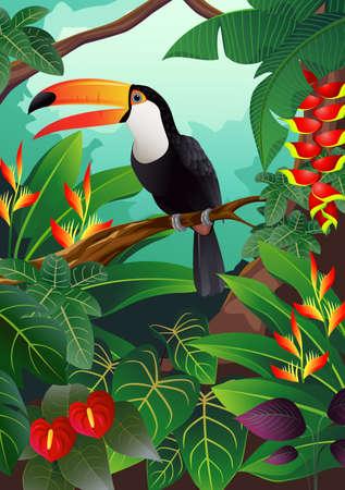 орнитология: Тукан птица