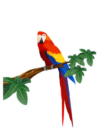 parkiet: Macaw vogels Stock Illustratie