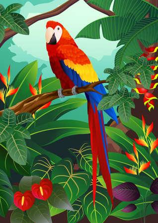 spectrum: Macaw Bird Illustration