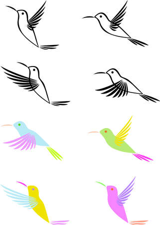 birds of paradise: Hummingbird  Illustration