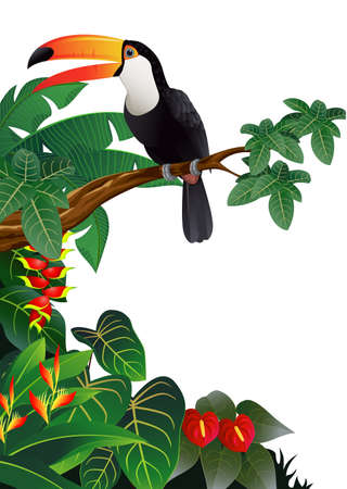 rare: Toucan Bird Illustration