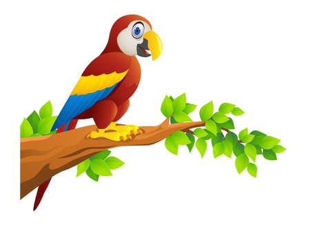 Macaw Bird Illustration