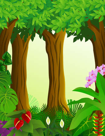 rainforest: forest