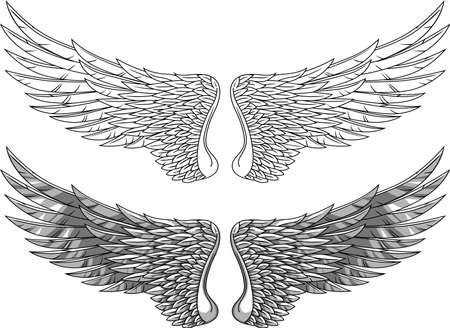 angelic: Wings Illustration