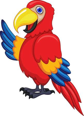 pappagallo: Parrot Uccello Vettoriali