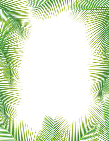 tropical border: Leaves of palm tree on white Illustration