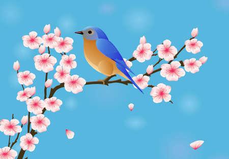 fleur cerisier: Contexte à la fleur et l'oiseau
