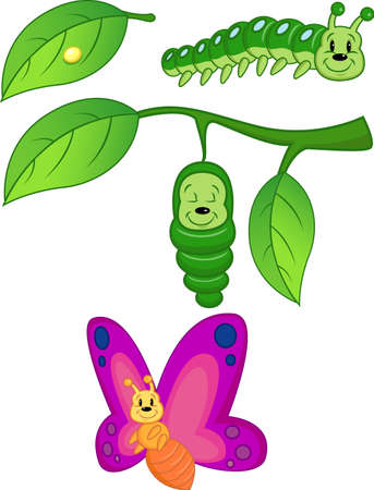 caterpillar worm: Butterfly Metamorphosis