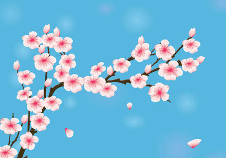 Vector Illustration Of Cherry Blossom 矢量图像